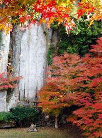 大野寺・弥勒磨崖仏の紅葉