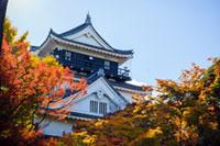 岡崎城(岡崎公園)の紅葉
