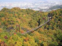 大阪府民の森 ほしだ園地の紅葉