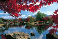 紫式部公園の紅葉