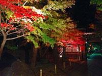 東漸寺の紅葉
