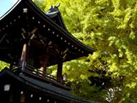 飛騨国分寺の紅葉