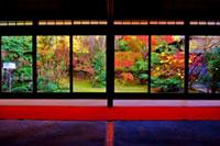 妙心寺 退蔵院の紅葉