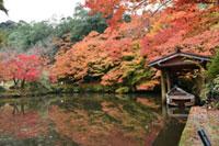 大本神苑の紅葉