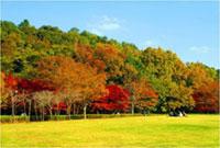 21世紀の森と広場の紅葉