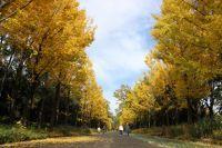 所沢航空記念公園の紅葉