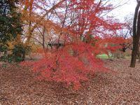とちぎわんぱく公園の紅葉