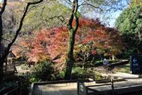 東高根森林公園の紅葉