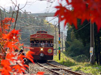 The Autumn Leaves of Usui Pass Railway Heritage Park
