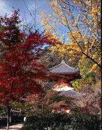 三瀧寺多宝塔の紅葉