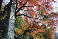 獅子ヶ鼻公園の紅葉