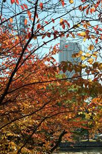 広島城の紅葉