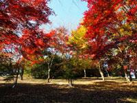 紅葉山公園(群馬)の紅葉
