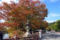 日牟禮八幡宮の紅葉