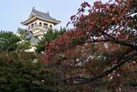 長浜城歴史博物館の紅葉