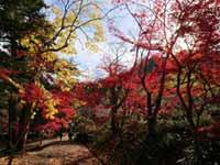 白毫寺の紅葉