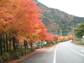 梅ヶ島温泉写真2