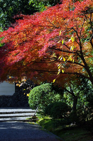 秋篠寺の紅葉|紅葉情報2019