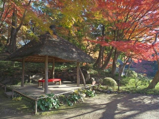 植物園 小石川 小石川植物園ー東京の庭園