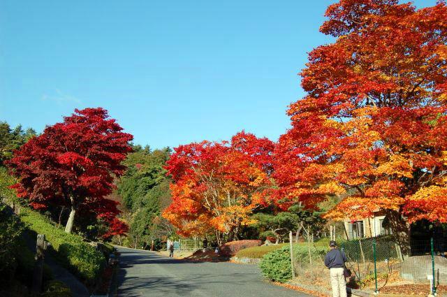 ひろしま 遊学 の 森