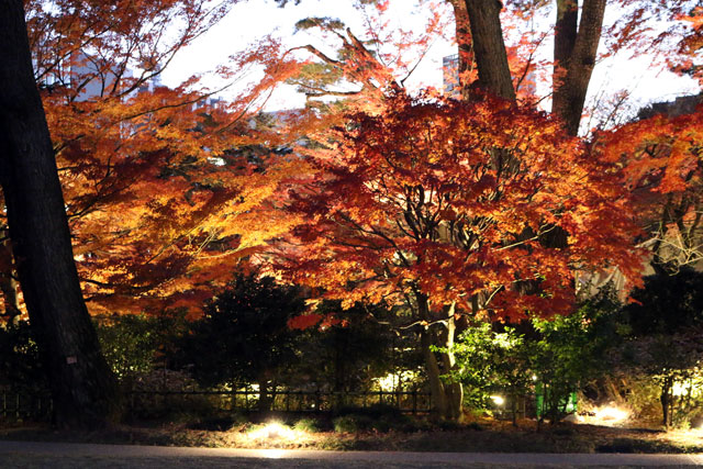 都 美術館 東京 庭園