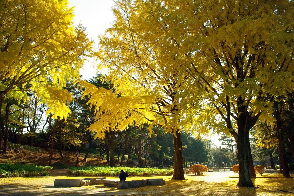 千葉公園の紅葉