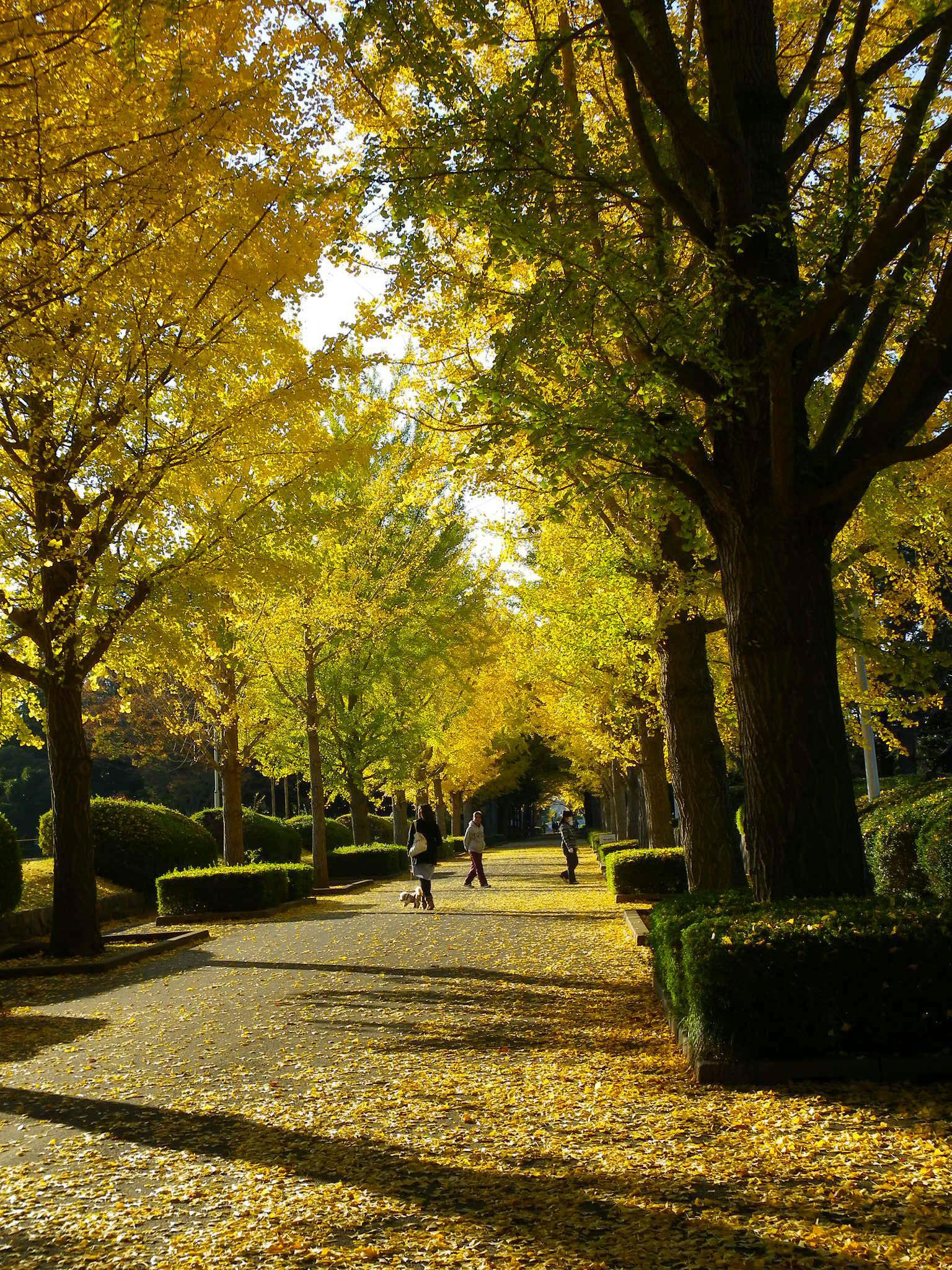 笠松 公園