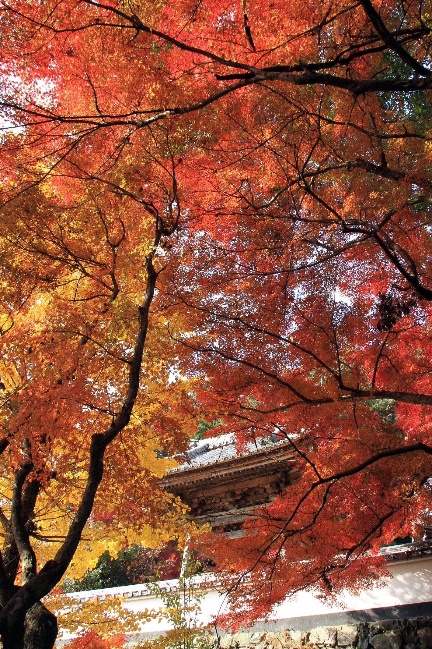 円興寺の紅葉情報|紅葉情報2018