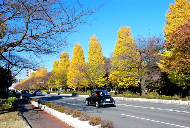 国立駅前 大学通りの紅葉|紅葉情報2020