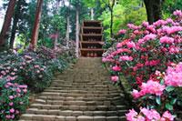 室生寺の初詣
