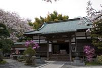 報国寺の初詣