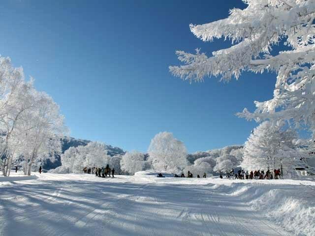 野沢 温泉 スキー 場 天気 野沢温泉スキー場 ‐ スキー場情報サイト
