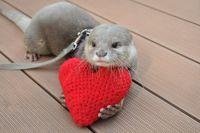 バレンタインにデートで行きたい!動物園や水族館のイベント