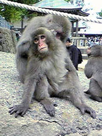 Takasakiyama Natural Zoo