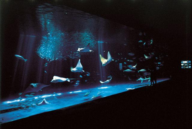 いおワールドかごしま水族館の営業案内や地図アクセス情報 動物園 ...