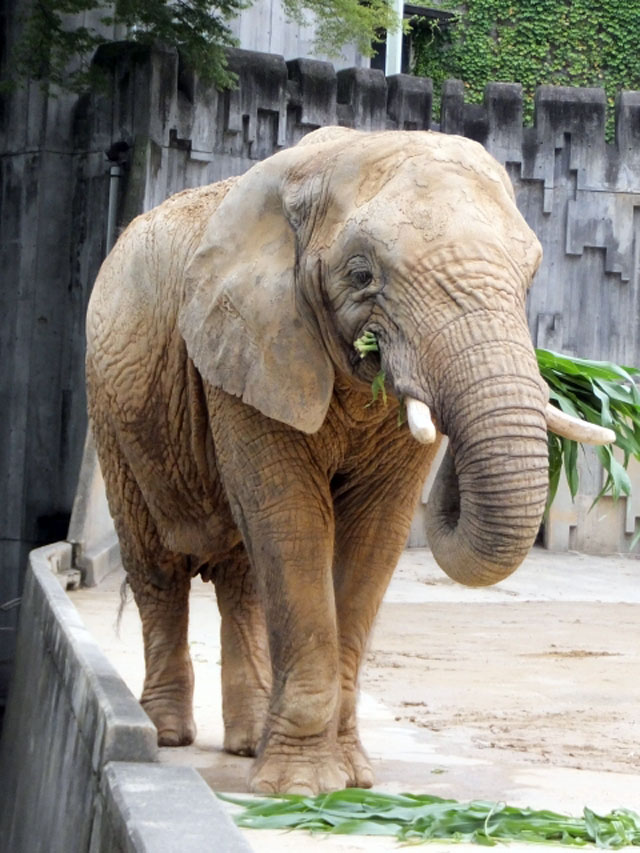 東山動物園 見どころ